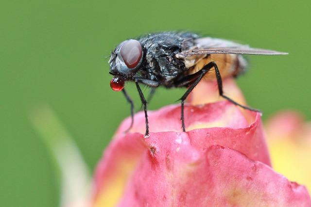 الحشرات الطائرة