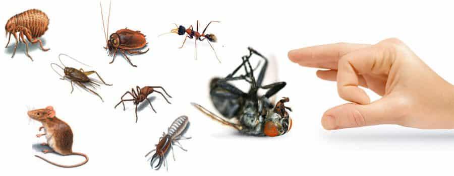 شركة مكافحة حشرات بشقراء